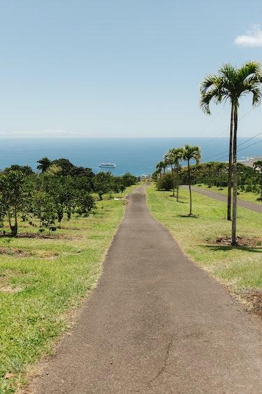 Usa hawaii holualoa coffee farm view