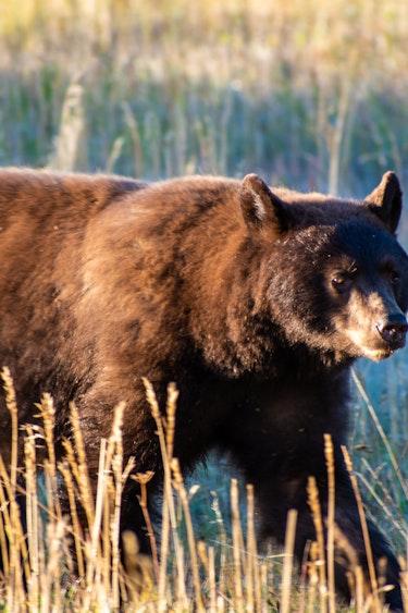 US Activiteit Easy Going 1 DSC6291 Grand Teton National Park Wildlife Safari