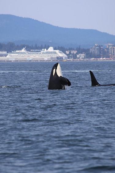 US Activiteit Easy Going 2 ORCA dick martin je X1m Vs O Ko unsplash