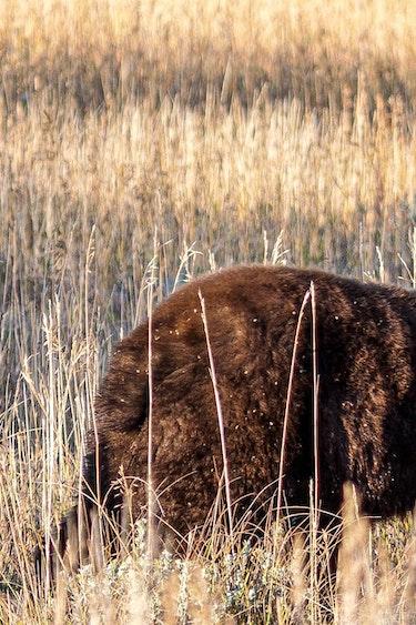 US Activiteit Easy Going 3 Screenshot 2019 09 26 at 14 21 36 Wildlife Tour Grand Teton NP