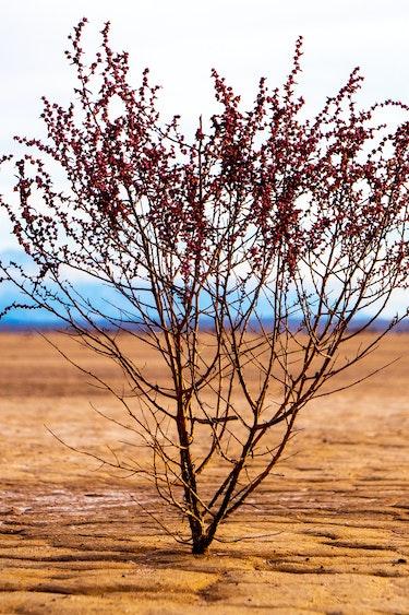 USA Death Valley Nationalpark Wüstenstrauch