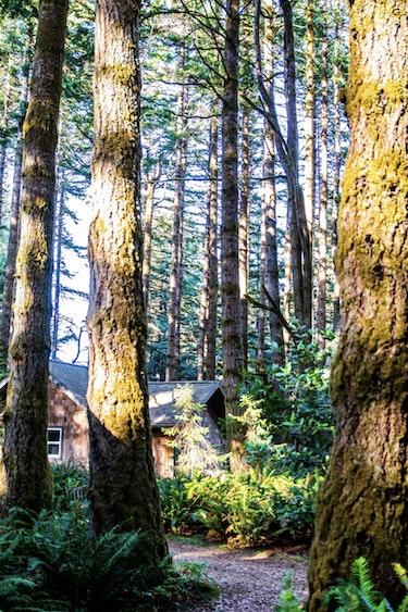 US Accommodation Comfortable Partner DSC 5919 Wildspring Guest Habitat South Oregon Coast Screenshot 2020 06 22 at 13 22 41