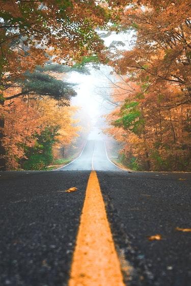 canada-road-trip-autumn-leaves-trees