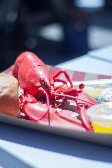 america-culinary-lobster-food