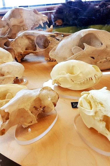 canada-museum-manitoba-fossil-skull