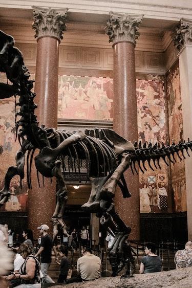 america-museum-history-dinosoar