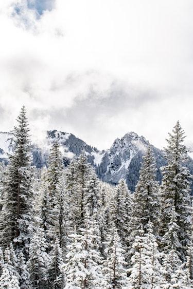 US friends besttime winter DSC 6456 Mt Rainier National Park