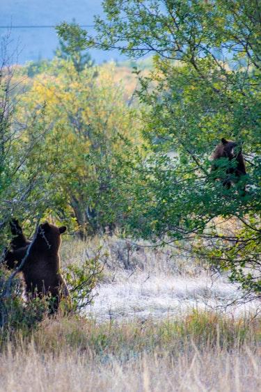 US Grand Teton Wildlife Tour Personal Detailed Page Activiteit4 1