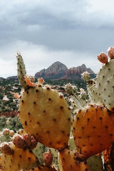 USA Arizona Sedona c Ralph Kayden Unsplash