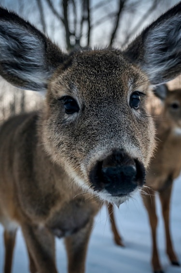 Can animals family jf brou unsplash
