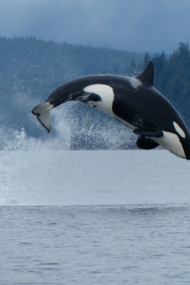 Can orca water campbell river 39094 master