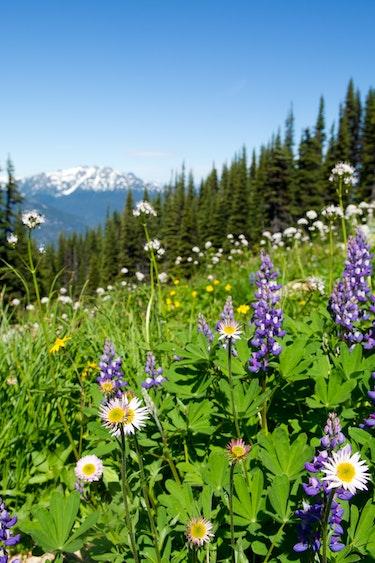 ca_couples_whistler_spring_view_flower_mountain