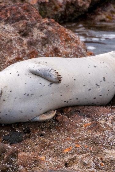 ca_harbor seals_wildlife