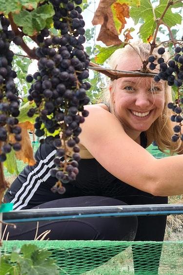 Ilona grapes vineyard okanagan valley canada
