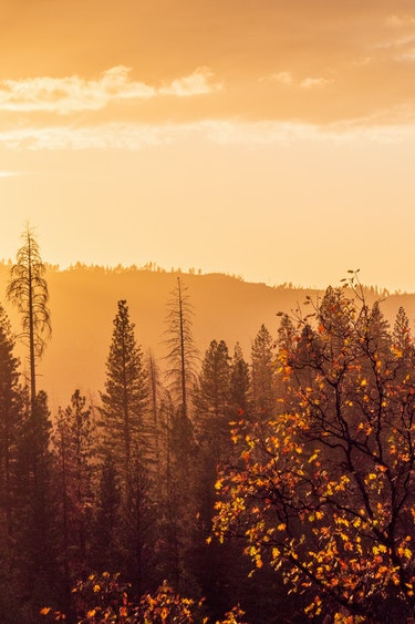 P1077248 Yosemite Scenery