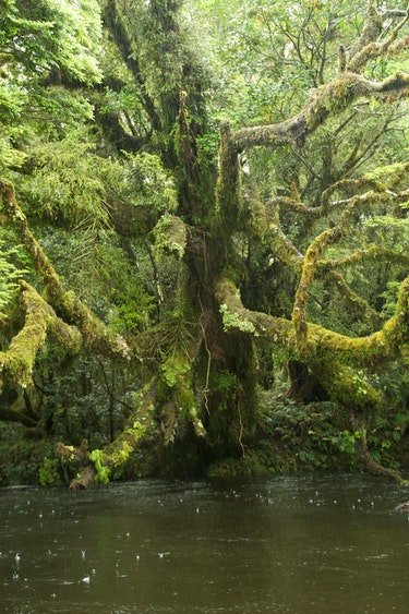 Fiordland 17