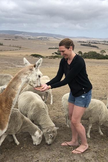 Sylvia australie alpaca