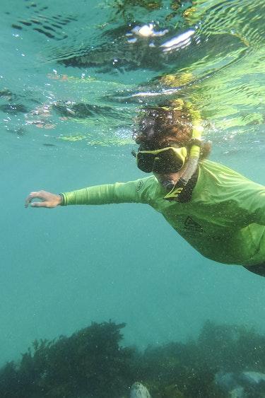 Aus abel in australia sydney snorkel