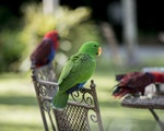 Parrots in your garden | Australia holiday