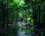 Daintree Rainforest | Australia nature