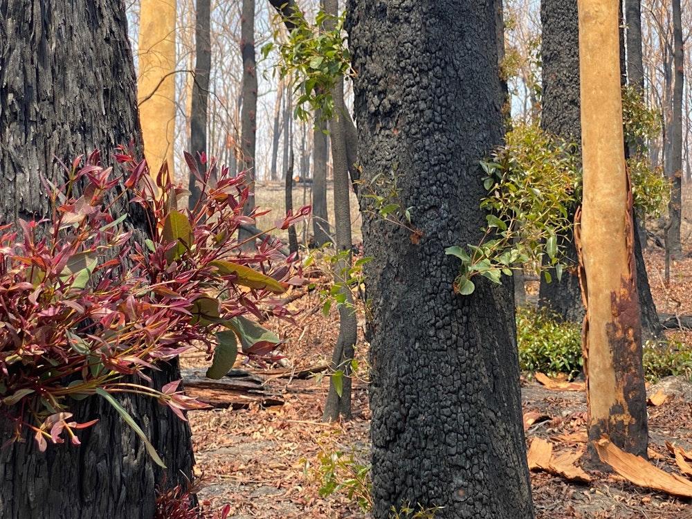 The impact of bushfires | Australia