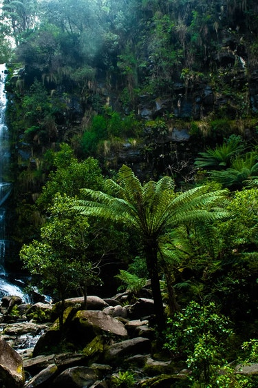 Australien Grampians Nationalpark Regenwald