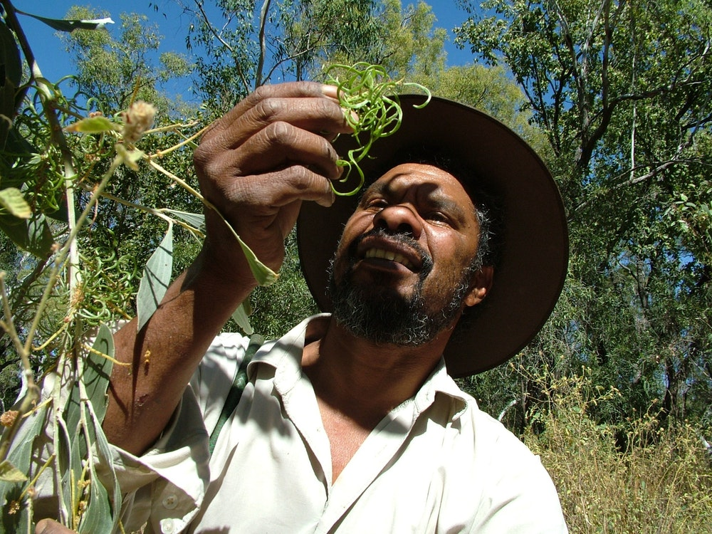 An Indigenous Guide shares his knowledge on a bush medicine walk