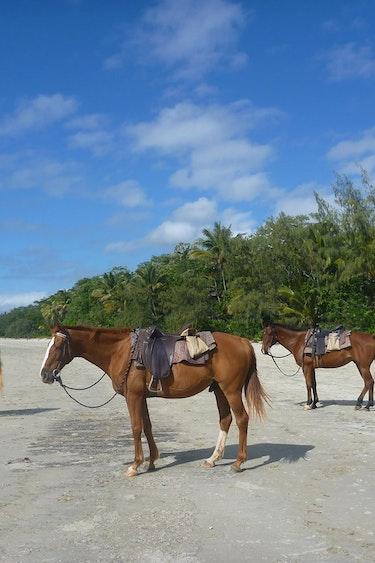 Au cape tribulation horserides 2 example trips