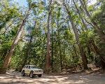 Tall trees Fraser Island | Australia holiday