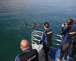 Swim with Dolphins in Adelaide   Australia holiday