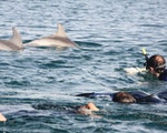 Surrounded by Dolphins | Australia active holiday