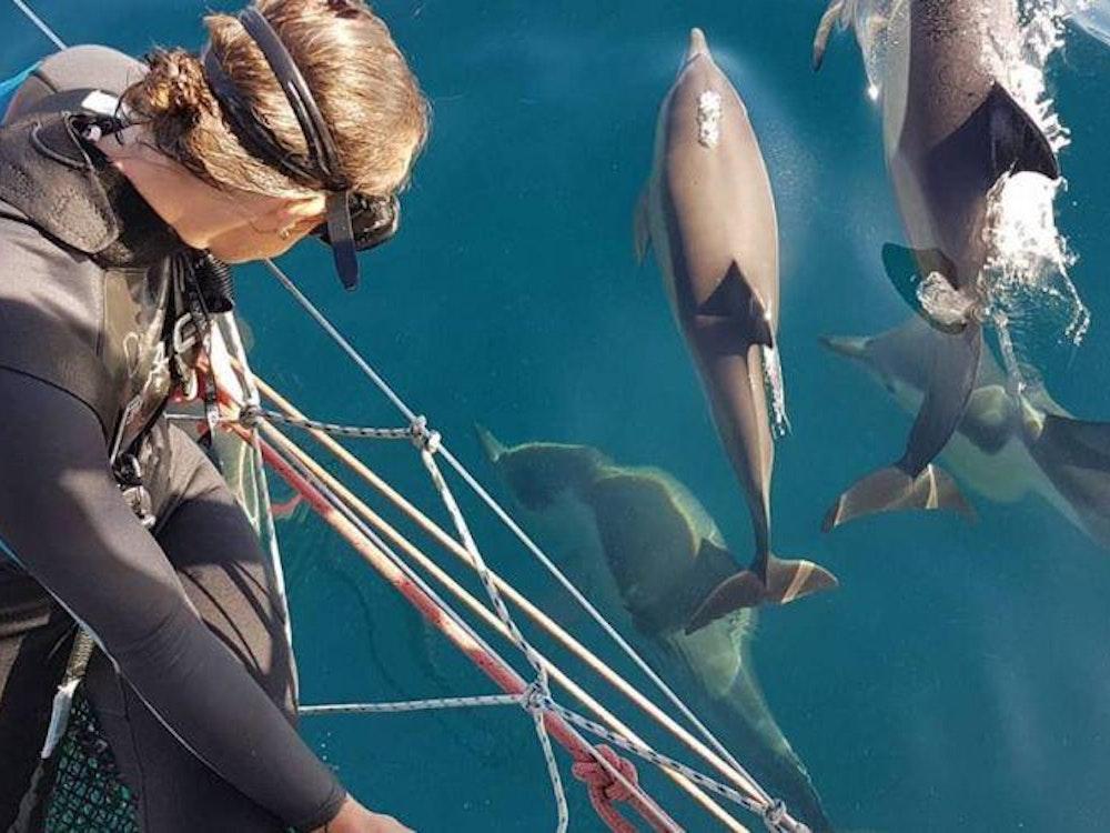 Swim with dolphins | Australia active holiday