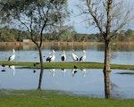 Australia wildlife | Australia holiday