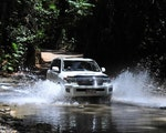 Drive through rainforest | Australia holiday