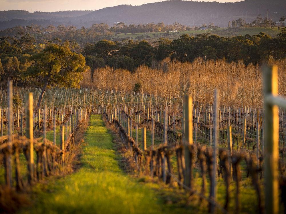 Gorgeous vineyards | Australia holiday