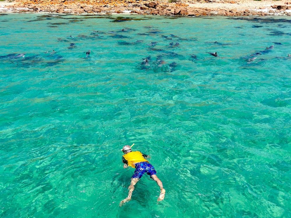 Snorkeling in South Australia | Australia holiday