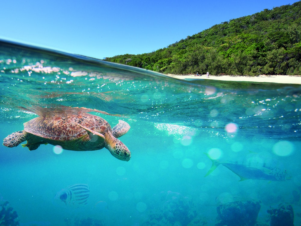Snorkel in the clear waters of North Queensland