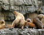 Bruny island wildlife | Australia holiday