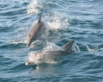 Happy dolphins | Australia wildlife
