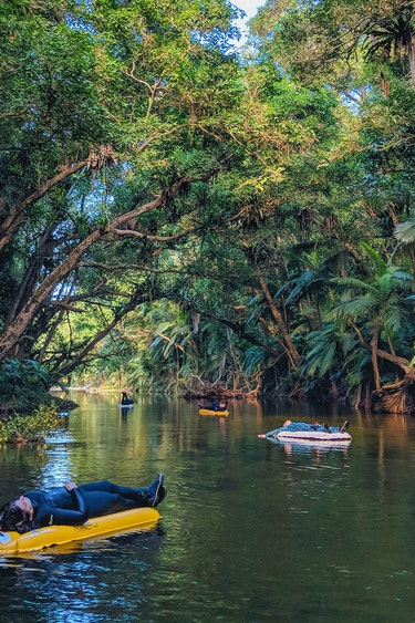 Aus port douglas rainforest snorkeling nature view family see and do easy going