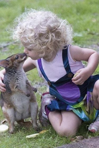 Aus rainforest lodge nature kids kangaroo family stays very comfortable