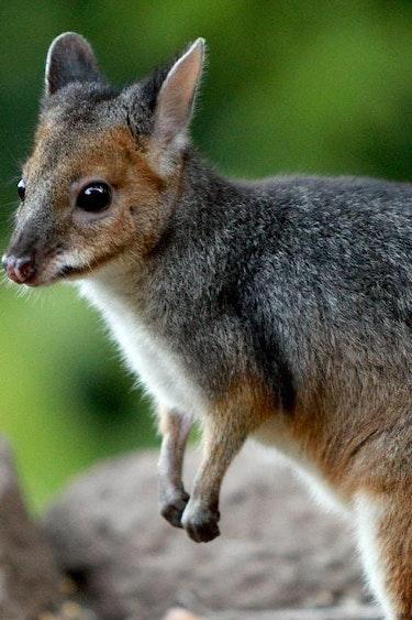 Aus rainforest lodge nature tree kangaroo family stays very comfortable