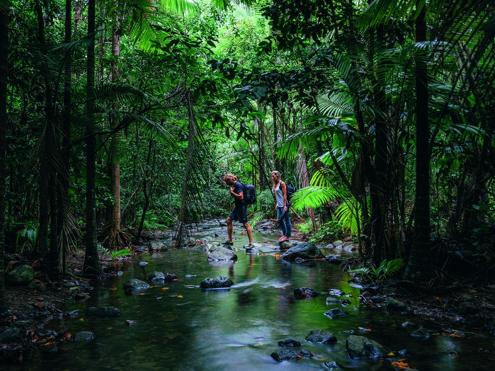 Wander through Daintree Rainforest with a local guide