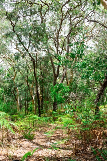 Au fraser island hike nature friends see and do adventurous