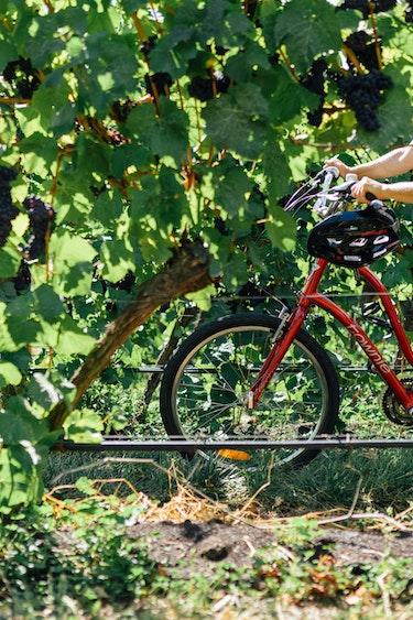 Auz on your bike ride the vines friends active 2