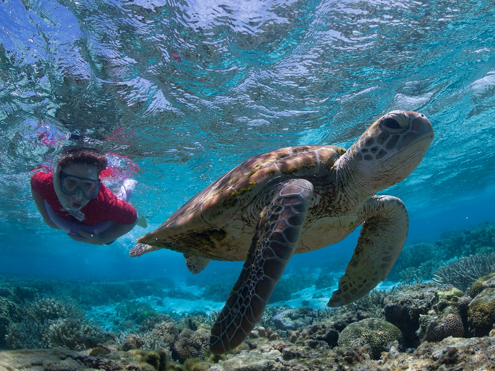 Swimming and snorkelling with turtles in Queensland