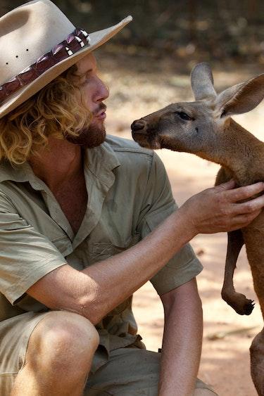 Australien Sehenswürdigkeiten: Kängurus im Outback