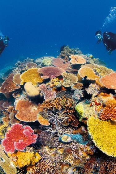 aus dive great barrier reef tropical north queensland cairns