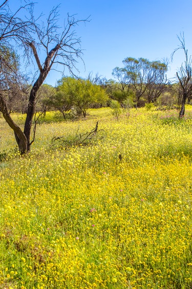 aus western australia wildflowers