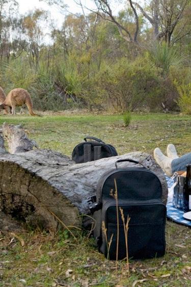 aus couples kangaroos picnic